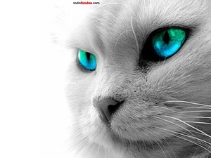 Cat with blue eyes and green