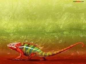 Multicolor chameleon