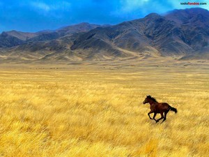 Horse galloping across the prairie