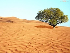 A tree in the dessert