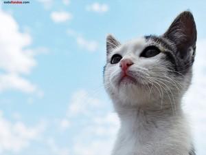 Cat under a blue sky