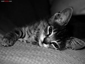 Cat lying