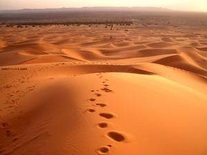Sahara desert (Morocco)