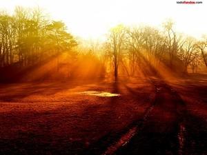 Trees filtering the sunlight