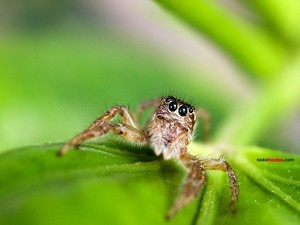 The look of the spider