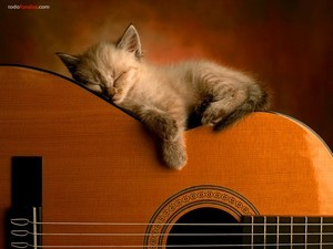 Kitten sleeping on a guitar