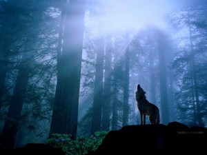 Wolf howling at the moon light