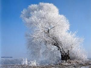 A white tree