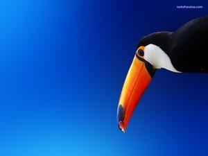 Toucan under a blue sky