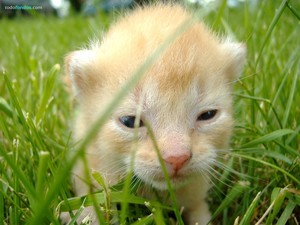 A young kitten in the grass