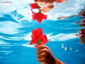 A red flower under water
