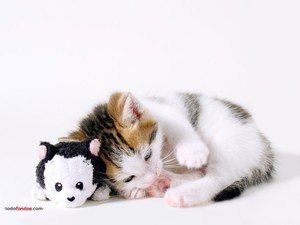 Kitty and her teddy