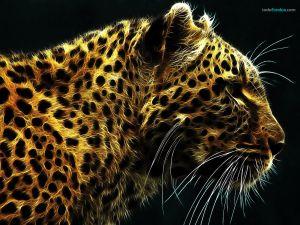 Fractal Cheetah