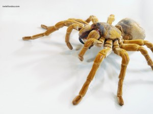 Spider close up view