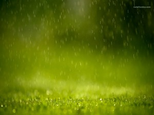 Raining on the grass