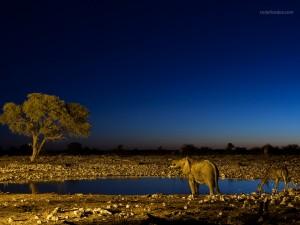 Photo taken at Etosha National Park in Namibia