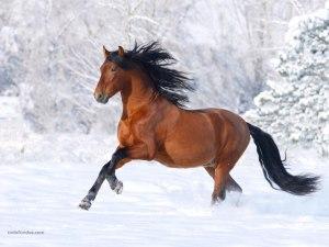 Horse galloping through the snow