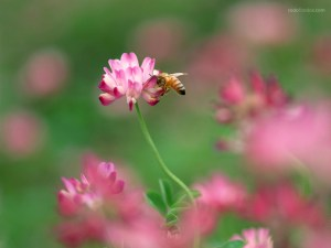 Bee sucking nectar from a flower