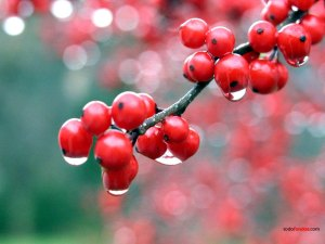Wet berries