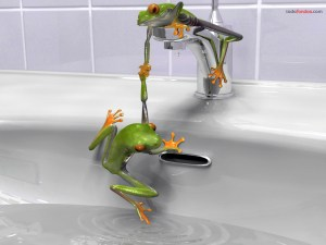 Frogs testing the water