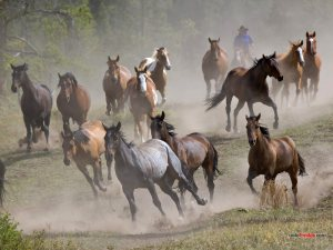 Herd of horses galloping