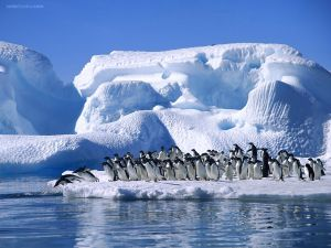 Penguins to water