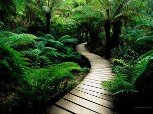 Way between the undergrowth