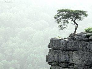 Tree on brink of precipice