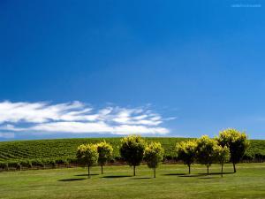 Green field under a blue sky