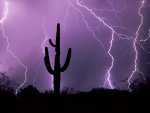 Cactus between rays