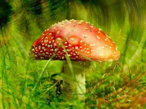 Mushroom with spots