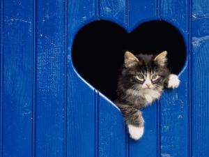 Kitten looking out a window with heart-shaped