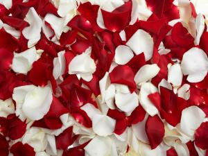 Rose petals, red and white