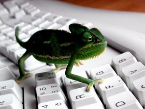 A chameleon by the keyboard