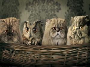 Three cats and one owl