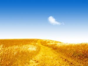Golden field under blue sky