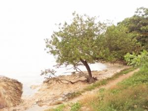 A tree on the beach