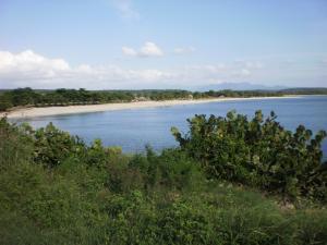 Beach between vegetation