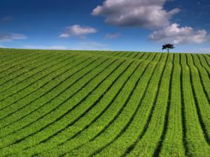 Striped field