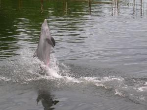 Dolphin stand over water