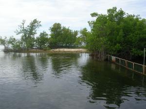 Dolphinarium between vegetation