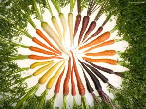 Carrots of different colors