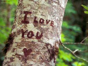 I love you, wrote in a tree
