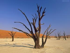 Dead Vlei, Sossusvlei National Park (Namibia, Africa)