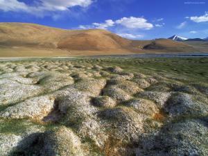 Tussocks of permafrost (Ladakh, India)