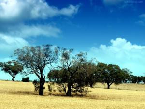 Dry trees