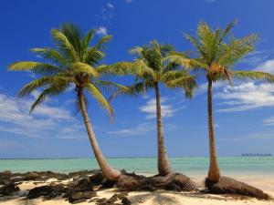 Small island with palm trees in Madagascar