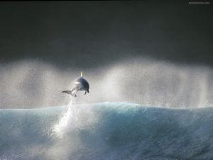 Dolphin jumping over a wave