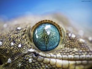 Reptilian eyes