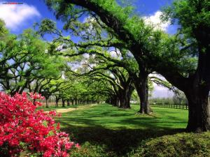 The Boone Hall Plantation and Gardens, in South Carolina
